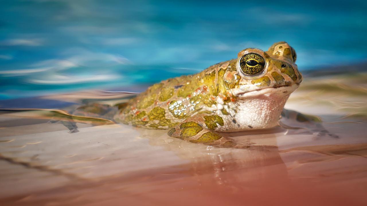 gewässer, natur, frosch